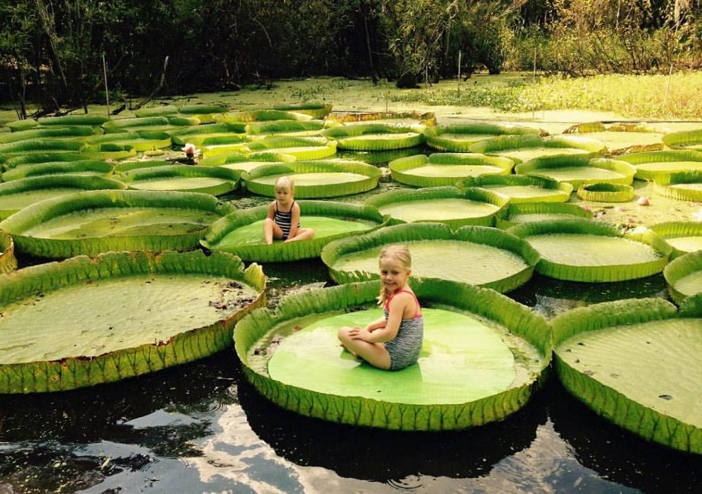 Kanapaha Botanical Gardens Florida Rv Trade