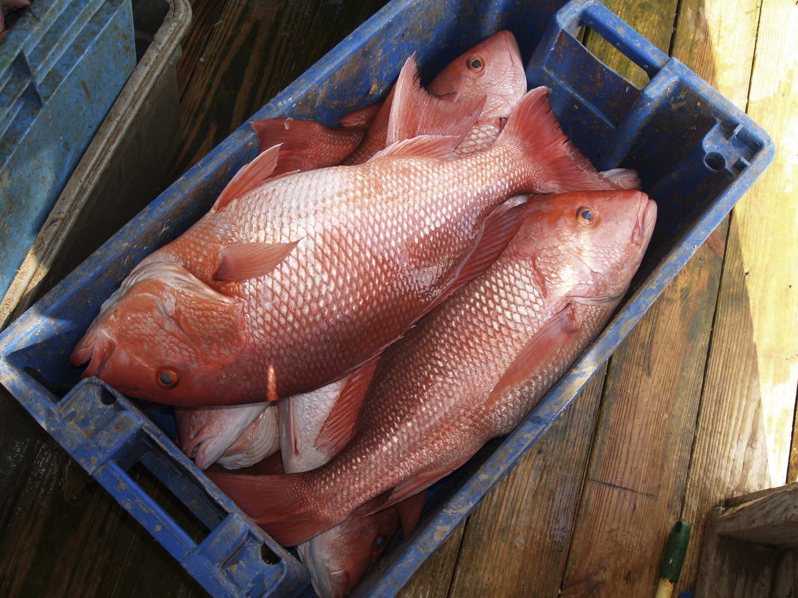 Do Visitors Need a License to Fish in Florida? - Florida RV Trade